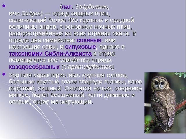 Совообра́зные(лат.Strigiformes, илиStriges)— отряд хищных птиц, включающи...