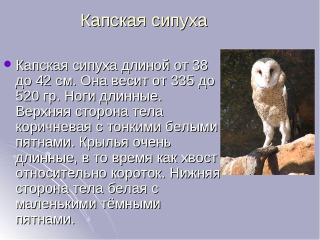 Капская сипуха Капская сипуха длиной от 38 до 42см. Она весит от 335 до 520...