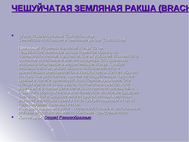 ЧЕШУЙЧАТАЯ ЗЕМЛЯНАЯ РАКША (BRACHYPTERACIAS SQUAMIGERA) Отряд Ракшеобразные (C...