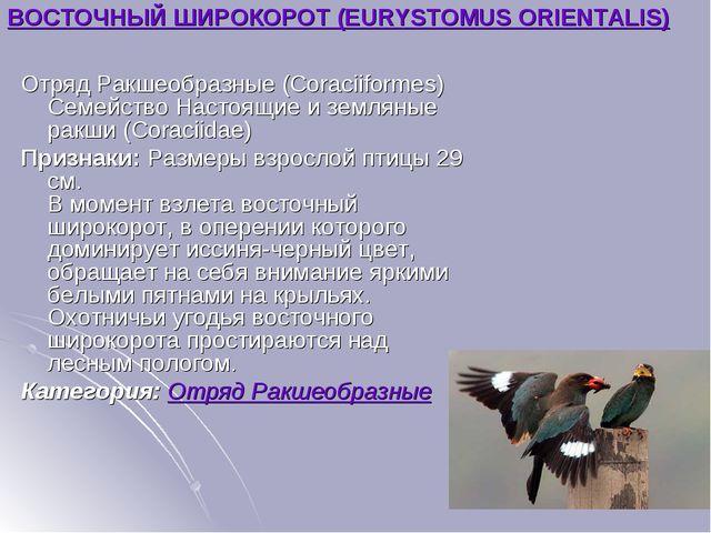 ВОСТОЧНЫЙ ШИРОКОРОТ (EURYSTOMUS ORIENTALIS) Отряд Ракшеобразные (Coraciiforme...