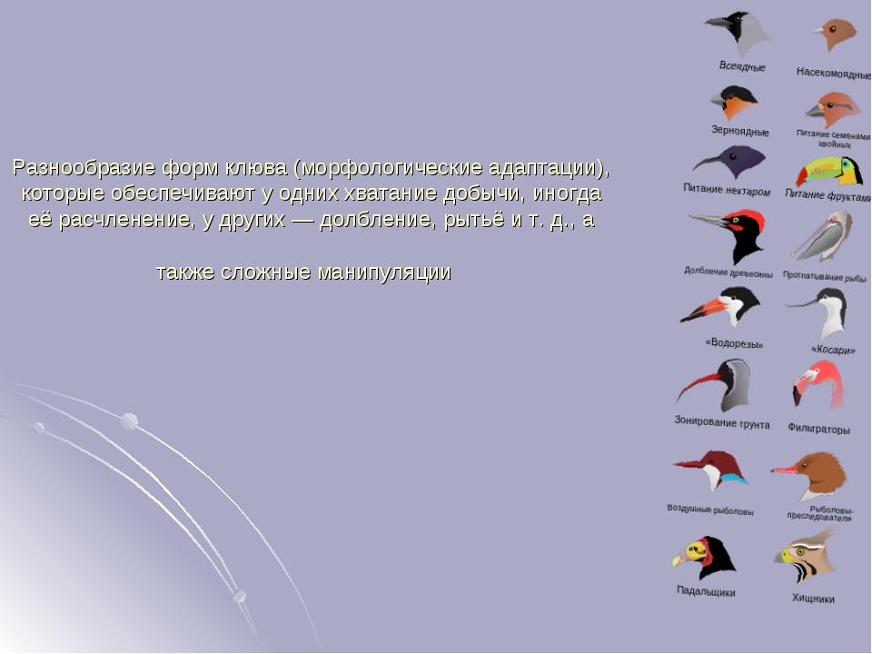 Разнообразие форм клюва (морфологические адаптации), которые обеспечивают у о...