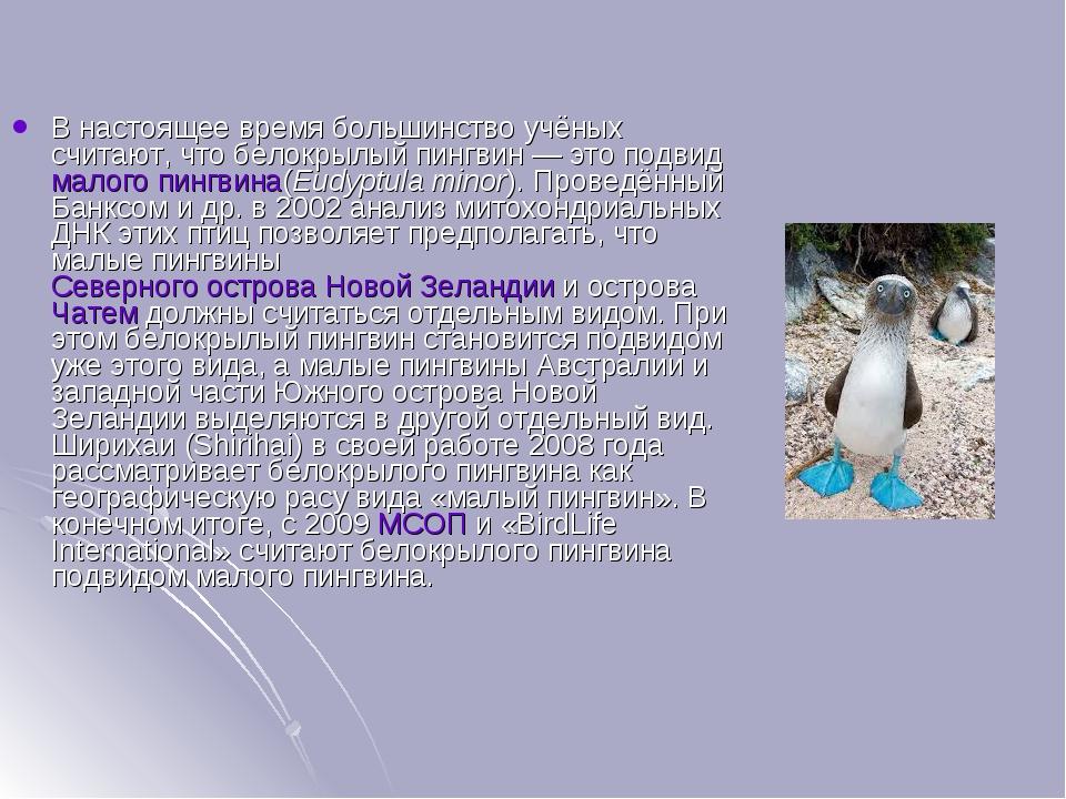 В настоящее время большинство учёных считают, что белокрылый пингвин— это по...