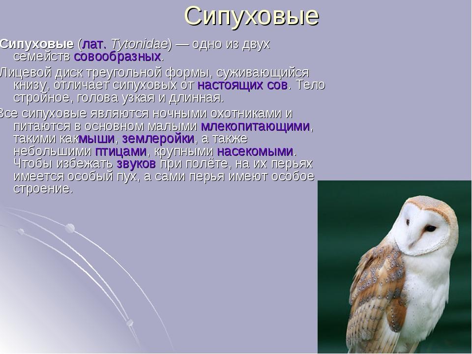 Сипуховые Сипуховые(лат.Tytonidae)— одно из двух семействсовообразных. Ли...