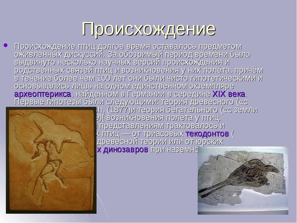 Происхождение Происхождение птиц долгое время оставалось предметом оживленных...
