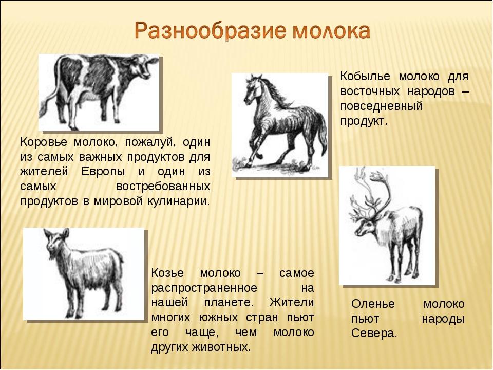 Оленье молоко пьют народы Севера. Кобылье молоко для восточных народов – повс...