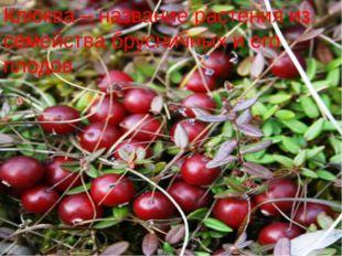 Клюква – название растения из семейства брусничных и его плодов.