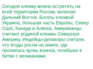 Сегодня клюкву можно встретить на всей территории России, включая Дальний Вос