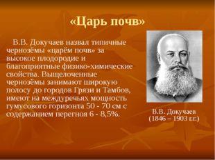 «Царь почв» В.В. Докучаев назвал типичные чернозёмы «царём почв» за высокое п