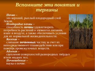 Вспомните эти понятия и термины Почва – это верхний, рыхлый плодородный слой