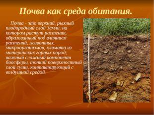 Почва как среда обитания. Почва - это верхний, рыхлый плодородный слой Земли,