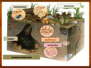 Главная особенность почвенной среды В почве можно укрыться от врагов, обитающ