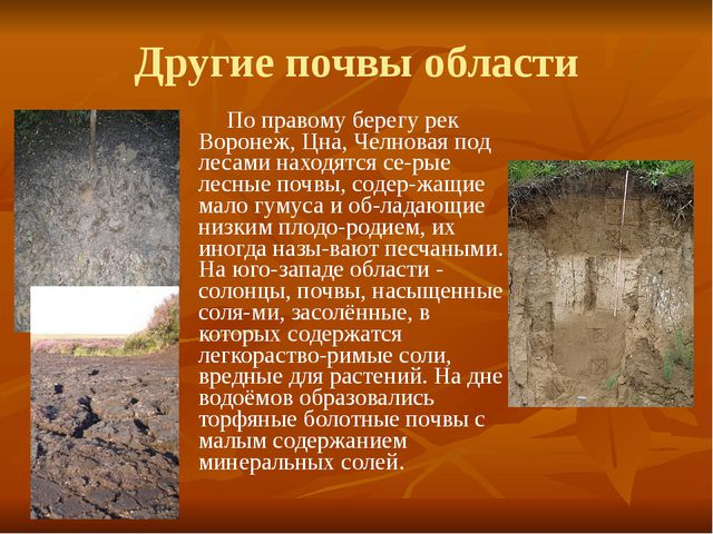 Другие почвы области По правому берегу рек Воронеж, Цна, Челновая под лесами...