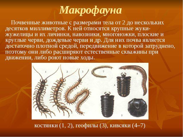 Макрофауна Почвенные животные с размерами тела от 2 до нескольких десятков ми...