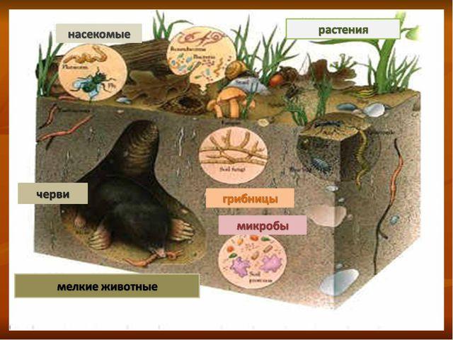 Главная особенность почвенной среды В почве можно укрыться от врагов, обитающ...