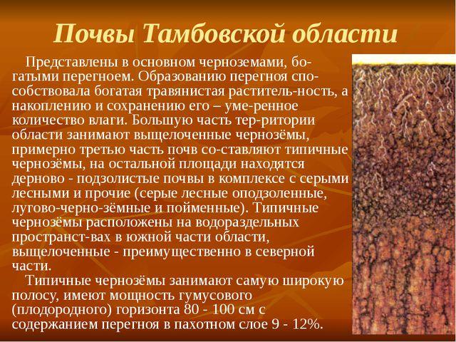 Почвы Тамбовской области Представлены в основном черноземами, бо-гатыми перег...