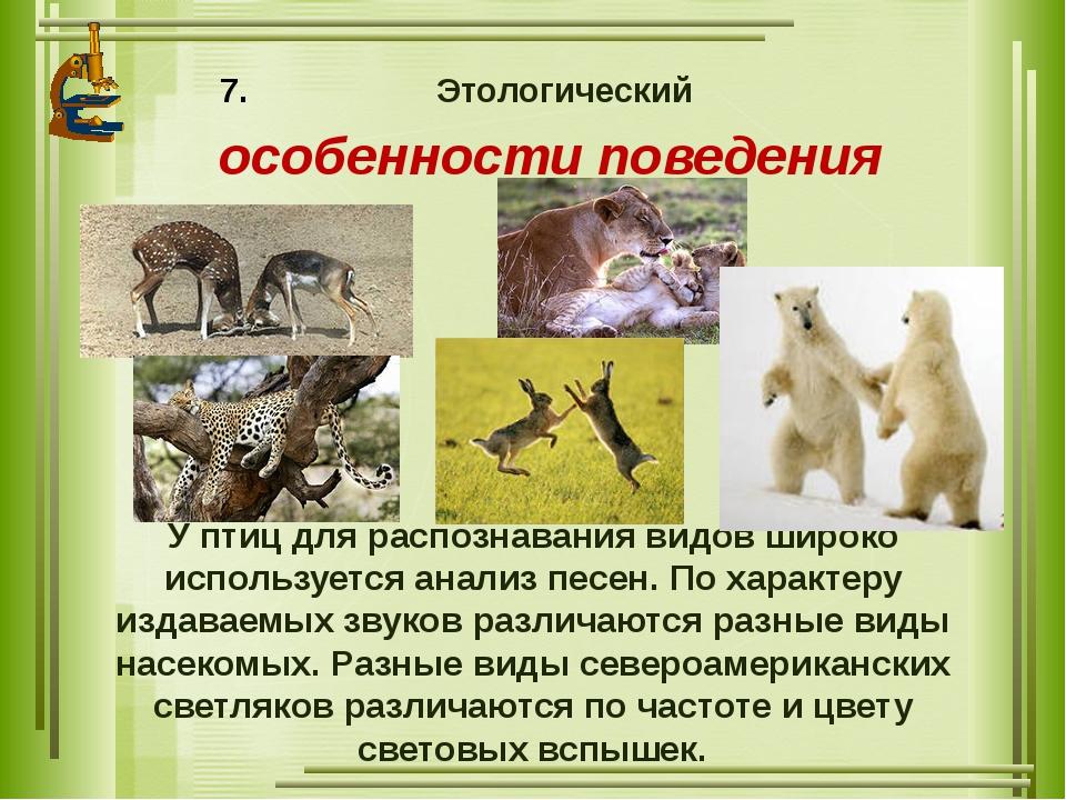 Этологический особенности поведения У птиц для распознавания видов широко исп...
