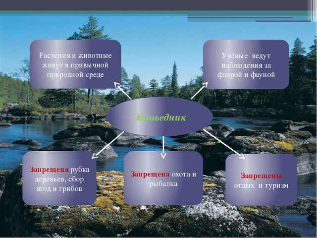 Заповедник Растения и животные живут в привычной природной среде Учёные ведут...