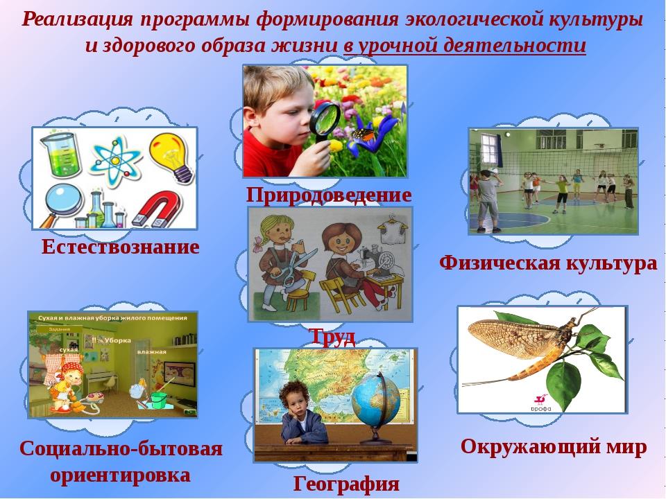 Реализация программы формирования экологической культуры и здорового образа ж...