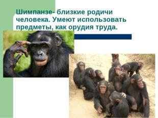 Шимпанзе- близкие родичи человека. Умеют использовать предметы, как орудия тр