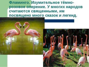 Фламинго. Изумительное тёмно-розовое оперение. У многих народов считаются свя