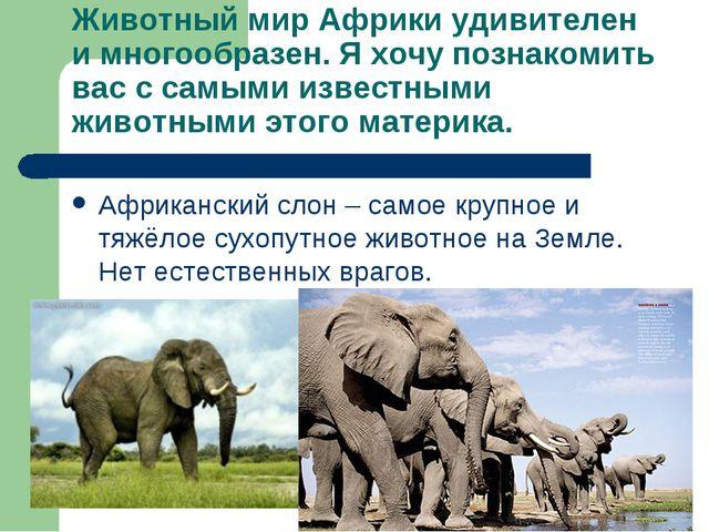 Животный мир Африки удивителен и многообразен. Я хочу познакомить вас с самым...