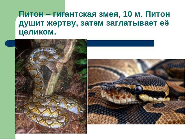 Питон – гигантская змея, 10 м. Питон душит жертву, затем заглатывает её целик...