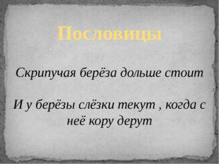 Пословицы Скрипучая берёза дольше стоит И у берёзы слёзки текут , когда с неё