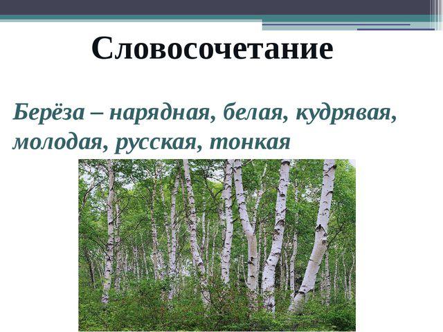 Словосочетание Берёза – нарядная, белая, кудрявая, молодая, русская, тонкая