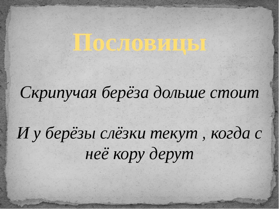 Пословицы Скрипучая берёза дольше стоит И у берёзы слёзки текут , когда с неё...