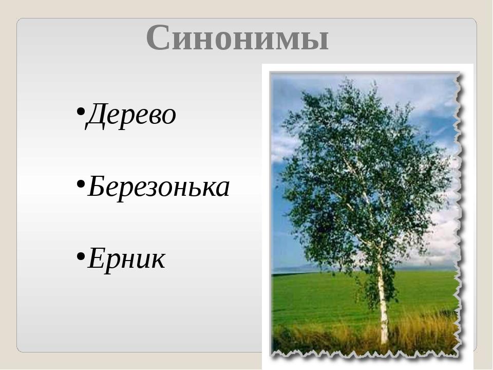 Синонимы Дерево Березонька Ерник