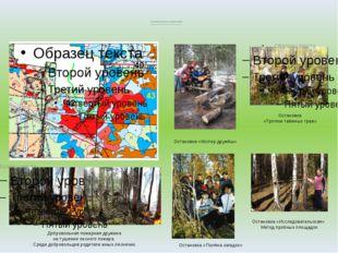 Экологическая тропа школьного лесничества «Радуга» пгт. Пойковский Лемпинско