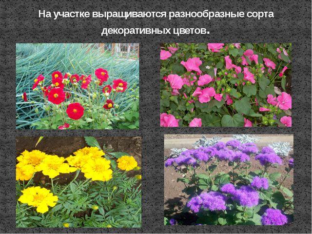 На участке выращиваются разнообразные сорта декоративных цветов.