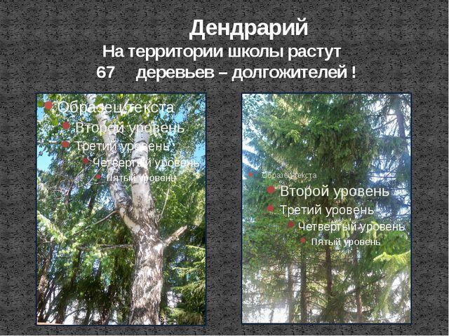 Дендрарий На территории школы растут 67 деревьев – долгожителей !