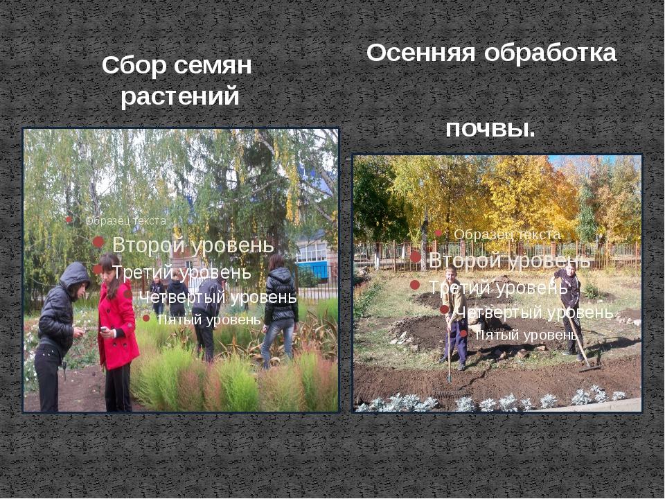 Сбор семян растений Осенняя обработка почвы.