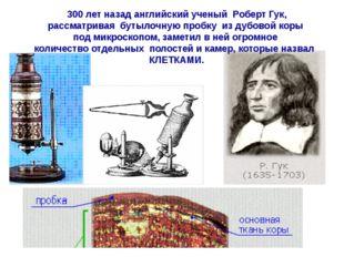 300 лет назад английский ученый Роберт Гук, рассматривая бутылочную пробку и