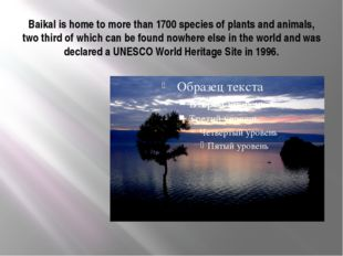 Baikal is home to more than 1700 species of plants and animals, two third of