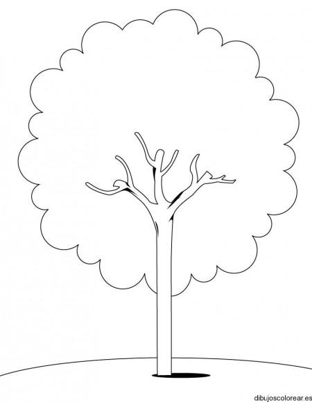 Скачать Дерево картинка для детей раскраска 4