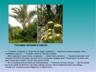 Саговая пальма и кактус  «— Скажите, пожалуйста, скоро ли нас будут поливать