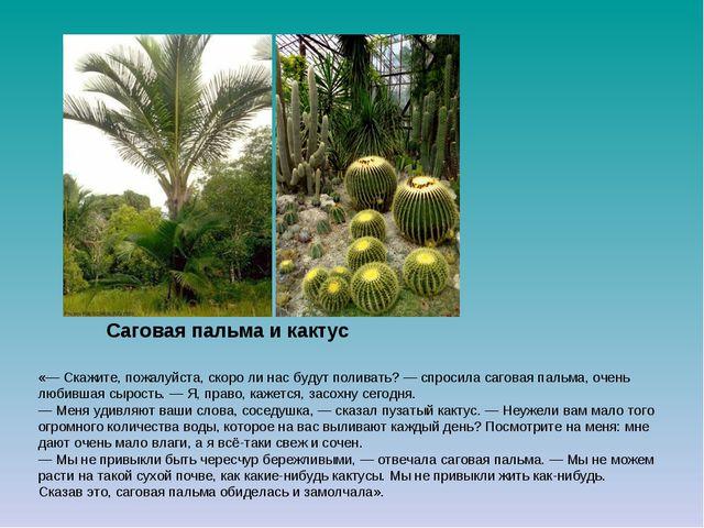 Саговая пальма и кактус  «— Скажите, пожалуйста, скоро ли нас будут поливать...