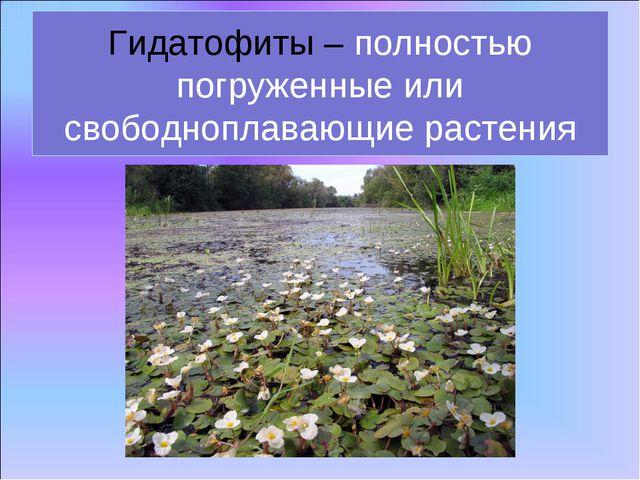Гидатофиты – полностью погруженные или свободноплавающие растения
