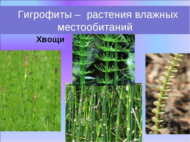 Хвощи Гигрофиты – растения влажных местообитаний