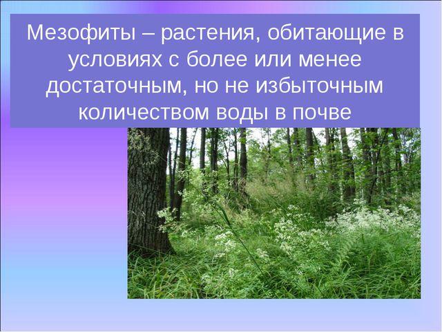 Мезофиты – растения, обитающие в условиях с более или менее достаточным, но н...