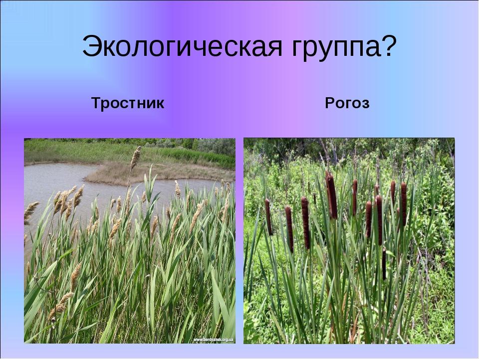 Тростник Рогоз Экологическая группа?