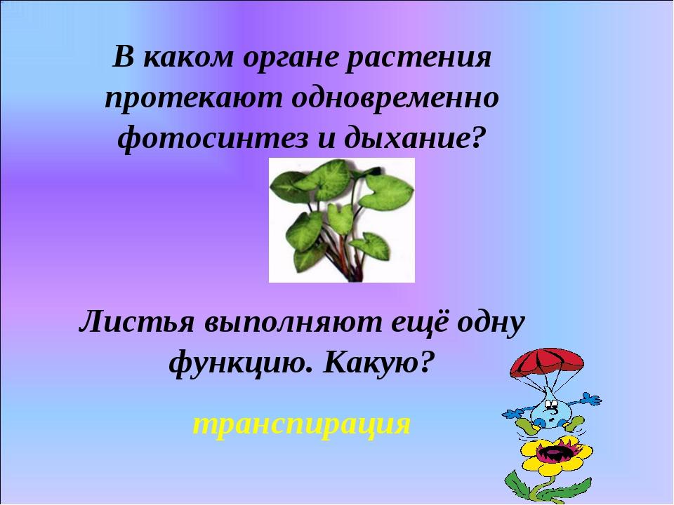 В каком органе растения протекают одновременно фотосинтез и дыхание? Листья в...