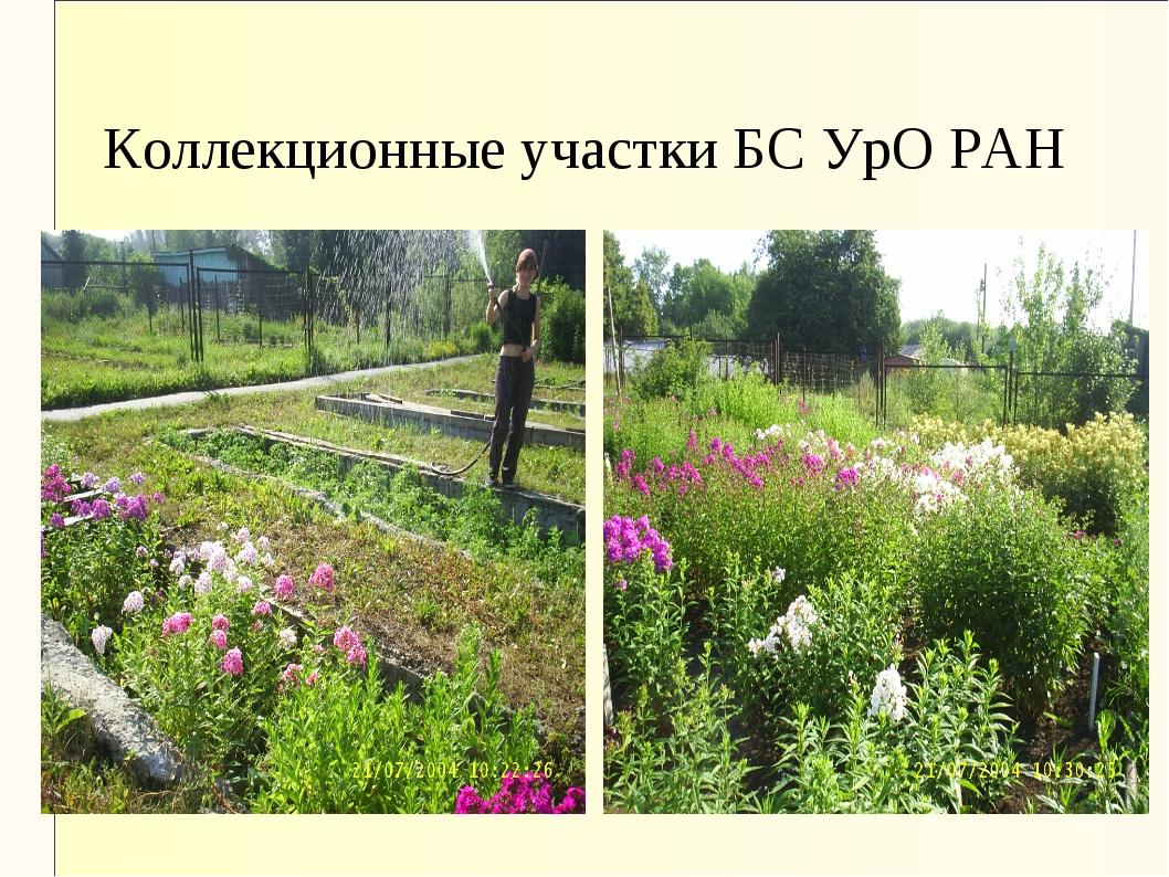 Коллекционные участки БС УрО РАН