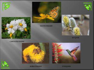 насекомыми ветром самоопыление животными птицами