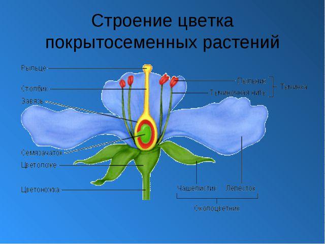 Строение цветка покрытосеменных растений