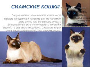 СИАМСКИЕ КОШКИ Бытует мнение, что сиамские кошки могут напасть на хозяина и