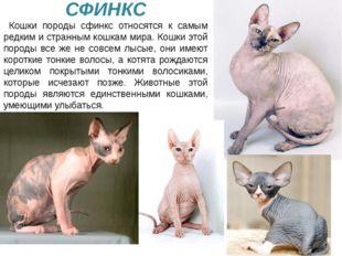 У кошки очень тонкий слух. Она слышит малейший шорох. СФИНКС Кошки породы сф