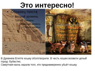 В Древнем Египте кошку считали священным животным. В Древнем Египте кошку об